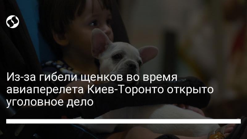 Из-за гибели щенков во время авиаперелета Киев-Торонто открыто уголовное дело
