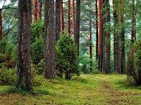 Чиновники Закарпатского лесхоза предстанут перед судом за служебную халатность повлекшую убытки в 3 млн грн – ГБР