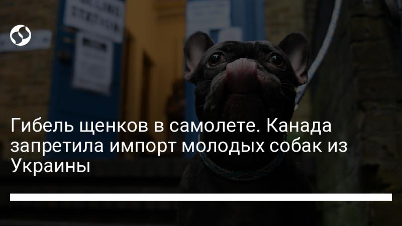 Гибель щенков в самолете. Канада запретила импорт молодых собак из Украины