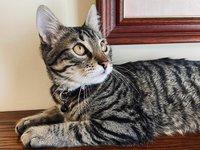У главного кота Львова появился блог в Instagram