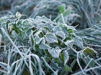 В большинстве областей Украины ожидается заморозки – ГСЧС