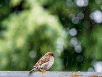 Дождливо и прохладно будет в Украине в ближайшие дни