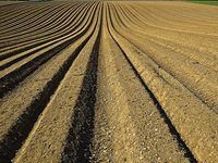 Мораторий привел к краже сельхозземель территорией почти в два Крыма, мы сделаем все для её возврата - Зеленский