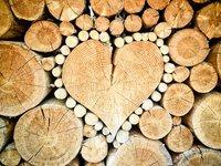 Принятие законопроекта о рынке древесины будет способствовать восстановлению лесов и прозрачности на рынках как в Украине, так и в ЕС - Стефанишина