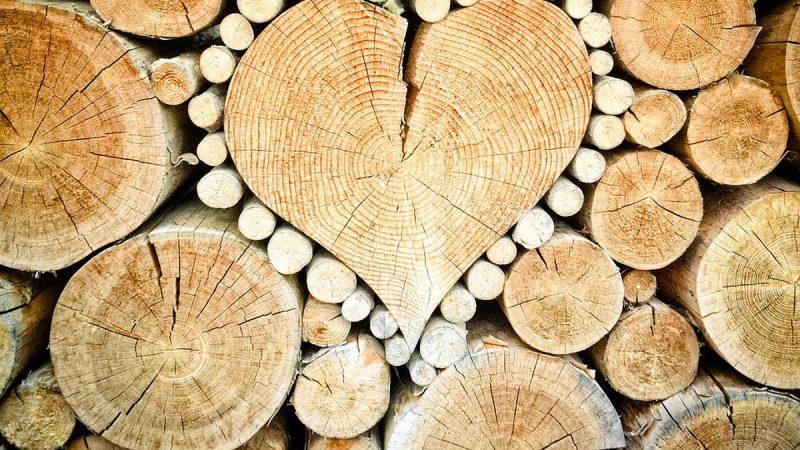 Принятие законопроекта о рынке древесины будет способствовать восстановлению лесов и прозрачности на рынках как в Украине, так и в ЕС – Стефанишина