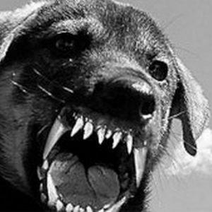 В Харькове пенсионерку загрызли собаки, полиция открыла дело